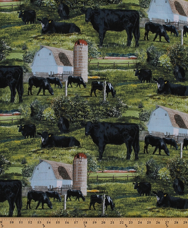 Cotton Black Aberdeen Angus Cattle Cows Bulls Animals