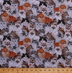 Cotton Cats Allover Kittens Kitty Kitties Animals Pets Feline Cotton Fabric Print by the Yard (1133201-B1-CREAM)