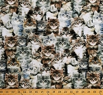 Cotton Kittens Cats Cute Realistic Kitties Animals Felines Pets One of a Kind Cotton Fabric Print by the Yard (50060D-X)