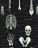 Cotton Glow in the Dark Skeleton Bones Biology Cotton Fabric Print (Fun-CG9810-Black)