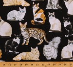 Cotton Cats Different Breeds House Cats Animals Pets Black Cotton Fabric Print by the Yard (GM-C8050-BLACK)