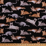 Cotton Cats Kittens Kitty Kitties Felines Siamese Cats Pets Animals on Black Cotton Fabric Print by the Yard (CAT-C5751-BLACK)