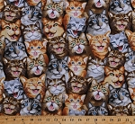 Cotton Cats Kittens Kitties Funny Faces Selfies Pets Animals Cotton Fabric Print by the Yard (MICHAEL-C5315-NATURAL)