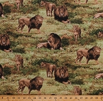 Cotton Lions Lioness Cubs Pride Animals Predators Big Cats Africa African Safari Scenic Savanna Wildlife Nature Born Free Cotton Fabric Print by the Yard (112-31911)