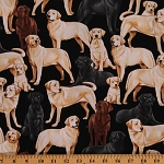 Cotton Labrador Retrievers Labs Puppy Dogs Black Yellow Chocolate Animals Canine Cotton Fabric Print by Yard (GM-C3240)