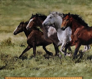 "35"" X 44"" Panel Wild Horses Running Equestrian Realistic Animals Wide Open Spaces Nature Moss Green Digital Print Cotton Fabric Panel (Q4419-98MOSS)"